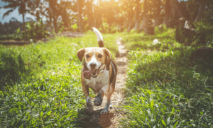 Beagle Names